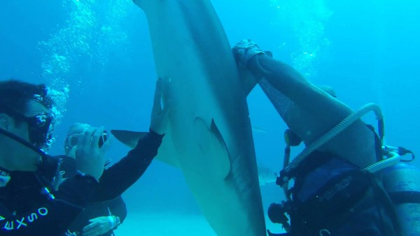 Duiker brengt dodelijke haai in trance (video)