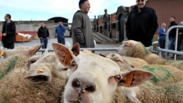 Oproep aan moslims: 'doneer geld en offer geen dieren'