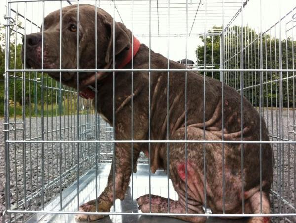 Negen verwaarloosde honden in beslag genomen