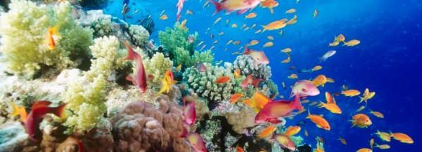 Australië trekt aan de noodbel om het Great Barrier Reef