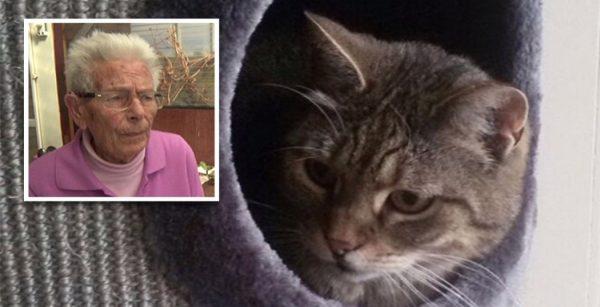 Bizar, mishandelde kat moet terug naar zijn eigenaar (video)